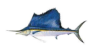 Outer Banks Sailfish Fishing